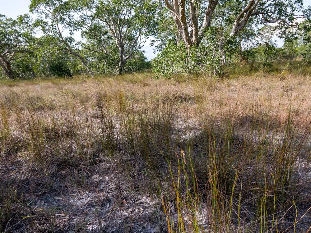 Lokalita rosnatek Drosera burmannii