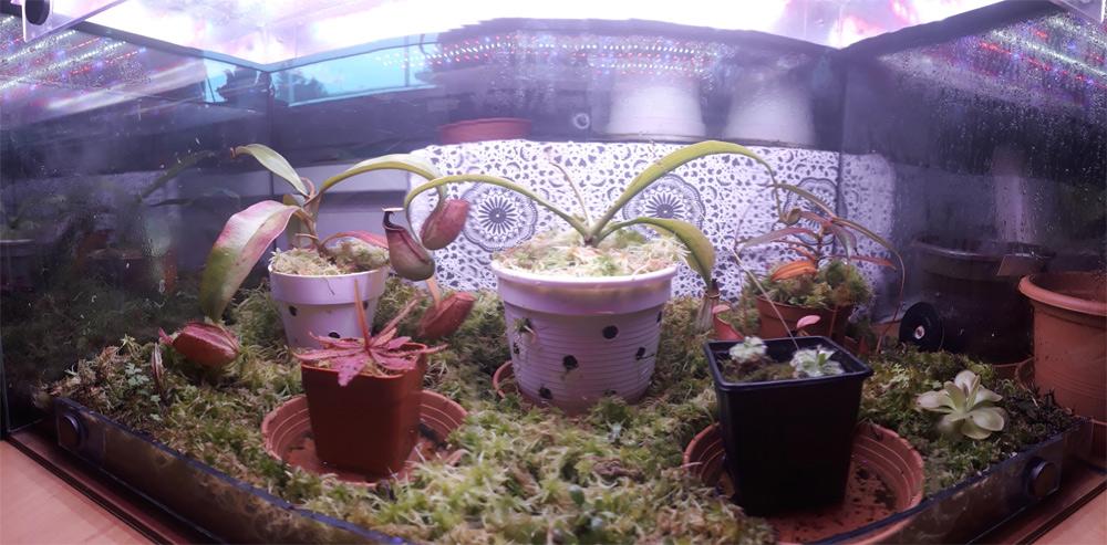 Pohled na akvárium s masožravými rostlinami